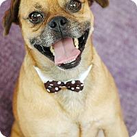 Adopt A Pet :: Ponce - Lawrenceville, GA