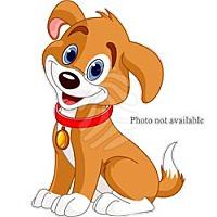 Australian Shepherd/Shepherd (Unknown Type) Mix Dog for adoption in San Bernardino, California - URGENT NOW!  San Bernardino