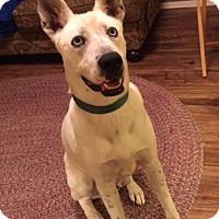 Husky Mix Dog for adoption in Coldwater, Michigan - Jake - IN TRAINING