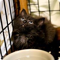 Adopt A Pet :: Johnny - Austin, TX
