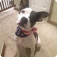 Boxer Mix Dog for adoption in Willingboro, New Jersey - Prince