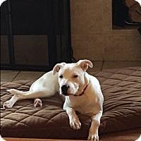 Adopt A Pet :: Uno - Hainesville, IL