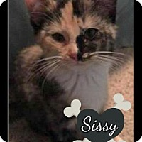 Adopt A Pet :: Sissy-adoption pending - Des Moines, IA