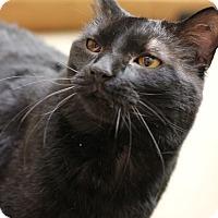 Adopt A Pet :: Ravi - Carlisle, PA
