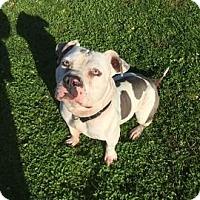 Adopt A Pet :: Frankie - Janesville, WI