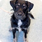 Adopt A Pet :: Roadie