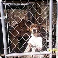 Adopt A Pet :: Junior - HOBOKEN, GA