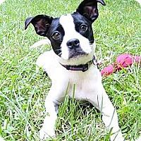 Adopt A Pet :: Olivia - Mocksville, NC