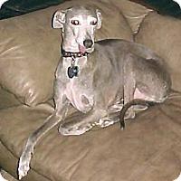 Adopt A Pet :: Bullet - Croton, NY