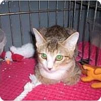 Adopt A Pet :: Ginny Belle - McDonough, GA