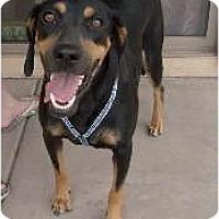 Adopt A Pet :: Bella - Litchfield Park, AZ