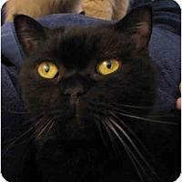 Adopt A Pet :: Brett - Davis, CA