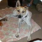 Adopt A Pet :: *URGENT* Bella