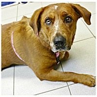 Adopt A Pet :: Patty - Forked River, NJ