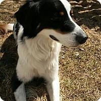 Adopt A Pet :: Jax - Midwest (WI, IL, MN), WI