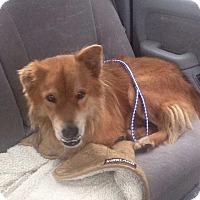 Adopt A Pet :: Charlie Muggles - Ocean Ridge, FL