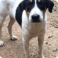 Adopt A Pet :: Chip - Columbia, TN