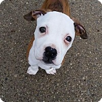 Adopt A Pet :: Kane - Garden City, MI