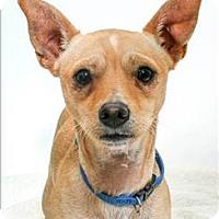 Adopt A Pet :: Peter - San Luis Obispo, CA