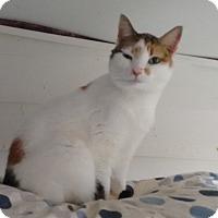 Adopt A Pet :: Lila - Morganton, NC