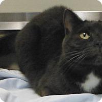 Adopt A Pet :: 31862963 - Cedartown, GA