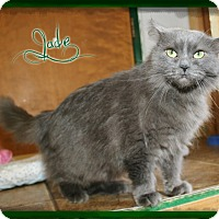 Adopt A Pet :: Jade - Shippenville, PA