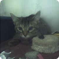 Adopt A Pet :: farrah - Muskegon, MI
