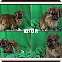 Adopt A Pet :: A327314 - St. Peters, MO