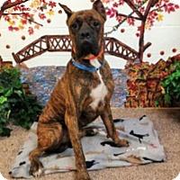Adopt A Pet :: Walter - Austin, TX