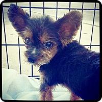Adopt A Pet :: Amos - Grand Bay, AL