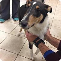 Adopt A Pet :: Ted - Chantilly, VA