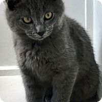 Adopt A Pet :: Felipe - Santa Fe, NM