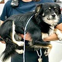 Adopt A Pet :: Merlin-ADOPTION PENDING - Boulder, CO