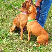 Adopt A Pet :: Lana & Lisa - Bonded Pair - N - Huntington, NY