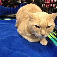 Adopt A Pet :: Chester - Ephrata, PA