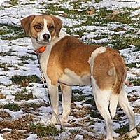 Adopt A Pet :: Sara - Toledo, OH