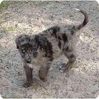 Adopt A Pet :: Cole - Orlando, FL