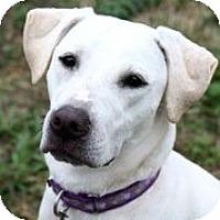Adopt A Pet :: Cali Girl - Austin, TX