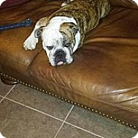 Adopt A Pet :: Peyton - Cibolo, TX