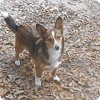 Adopt A Pet :: Sunshine - Cantonment, FL