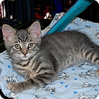 Adopt A Pet :: Kaydon - Sunderland, ON