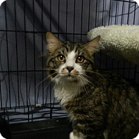 Adopt A Pet :: Bruce - Scottsdale, AZ