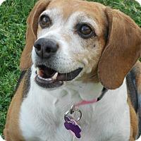 Adopt A Pet :: GINGER - Phoenix, AZ