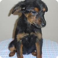 Adopt A Pet :: Sally - Gary, IN