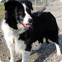 Adopt A Pet :: Hazel - Bellevue, NE