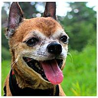 Adopt A Pet :: Davis - Forked River, NJ