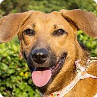 Adopt A Pet :: Flora - San Francisco, CA