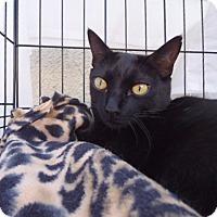 Adopt A Pet :: Willie - Berkeley, CA
