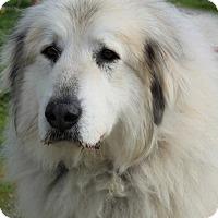 Adopt A Pet :: Rhonda - Grants Pass, OR