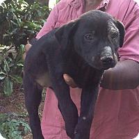 Adopt A Pet :: Lanie - Buffalo, NY